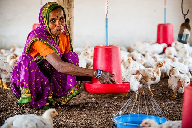 Woman poultry farmers open their own feed factories